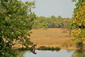 Tiger at water