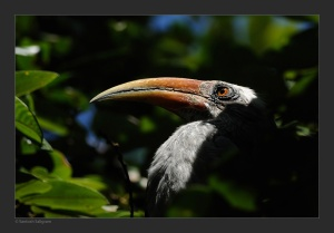 Creative description of grey hornbill